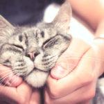 AAA cercasi coccolatore di gatti: 2000 euro al mese per il lavoro dei sogni