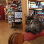 Esiste una biblioteca dove i gattini girano liberi, e puoi anche adottarli