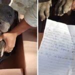 """Bambino lascia il suo cucciolo al canile perché il padre lo picchia: """"Ecco un peluche, così non mi dimentica"""""""