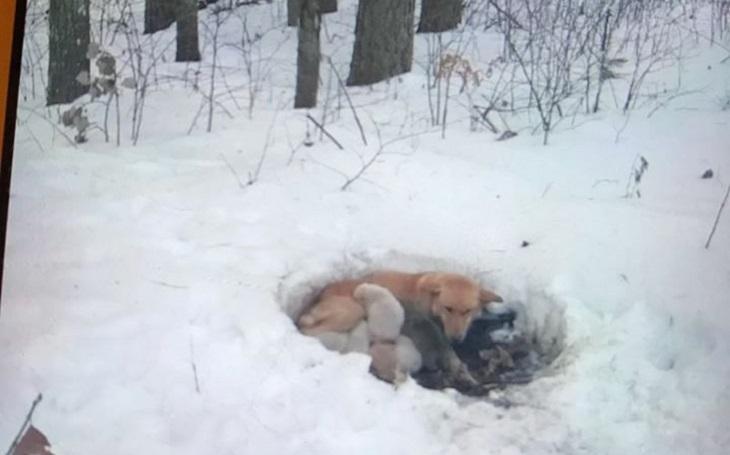 Cane abbandonata partorisce 6 cuccioli sulla neve e li protegge col suo corpo